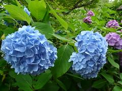 P1100012 (Urizev) Tags: naturaleza verde relax asia kamakura religion jardin paz viajes japon buda templo lunademiel santuario nipon budismo meditacion sintoismo