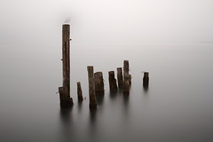 Pillars (Seagull Photobomb) (John Westrock) Tags: wood longexposure winter white mist motion blur bird water horizontal fog canon washington seagull foggy mysterious pacificnorthwest pugetsound tacoma pnw canonef2470mmf28lusm marinepark photobomb canoneos7d