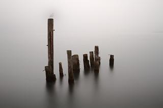 Pillars (Seagull Photobomb)
