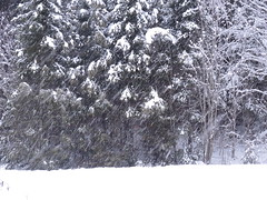 Sonw In Algonquin Park (FABOO1918) Tags: park camping winter ontario canada nikon coolpix algonquin provincial algonquinprovincialpark p7700 nikoncoolpixp7700 birdsalgonquinbday12013