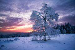 cold sunset (Dennis_F) Tags: schnee trees winter sunset snow black cold tree ice clouds zeiss forest germany deutschland frozen woods sonnenuntergang sony wide wolken fullframe dslr kalt eis wald bume ultra schwarzwald blackforest baum ssm 1635 uwa weitwinkel gefroren ultrawideangle uww a850 163528 sonyalpha sonydslr vollformat schwarzwaldhochstrase zeiss1635 sal1635z cz1635 sony1635 dslra850 sonya850 sonyalpha850 alpha850 sonycz1635