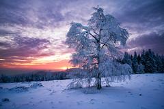 cold sunset (Dennis_F) Tags: schnee trees winter sunset snow black cold tree ice clouds zeiss forest germany deutschland frozen woods sonnenuntergang sony wide wolken fullframe dslr kalt eis wald bäume ultra schwarzwald blackforest baum ssm 1635 uwa weitwinkel gefroren ultrawideangle uww a850 163528 sonyalpha sonydslr vollformat schwarzwaldhochstrase zeiss1635 sal1635z cz1635 sony1635 dslra850 sonya850 sonyalpha850 alpha850 sonycz1635