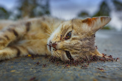 even the disassemblers (richard_baxter) Tags: life road cat death birth ants assemble continuity disassemble