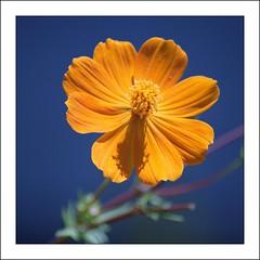 Sunlit (mark willocks) Tags: flower sunshine yellow washingtondc scanned nationalarboretum nikond90
