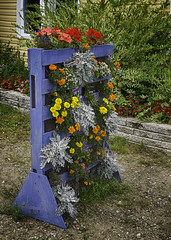 160822_797 Pallet Recycling Idea (MiFleur...Thank You for 2 Million Views) Tags: recuperation recycling flower original sustainable durable reuse