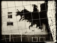 Danger (Vladimir Serebryanko) Tags: bw blackandwhite monochrome sepia russia stpetersburg spb snare trap wall window greenery noiretblanc         city