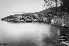 Rocks (ErikN86) Tags: water rocks sea sweden sverige black white blackandwhite long exposure nature landscape tree sony sonydslr sonya77ii