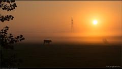 Wired sunrise
