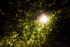 It came out while you look up (tmpss91430) Tags: shadow street lamp leaves leaf forest shade light pass road promiss promising bright hope