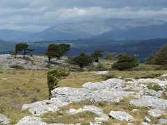 View of Fairfield from Whitbarrow, Cumbria, 21 August 2016 (AndrewDixon2812) Tags: whitbarrow kendal witherslack cumbria lakedistrict limestone pavement rocks plateau fairfield lords seat deformed stunted trees