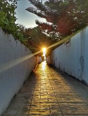 Near Beach Experience (Yassine Abbadi) Tags: beach alley sun sunny glow ray sunrise tree tetouan tetuan morocco maroc marruecos cabonegro cabo negro wall sky hdr