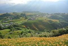 Daylilies in Sixty Rock Mountain-Hualien-Taiwan (Little Henry) Tags: flower mountain landscape taiwan hualien