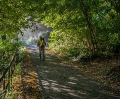 Nel bosco (fil_de_fer) Tags: 2016 italia viafrancigena toscana sentiero bosco