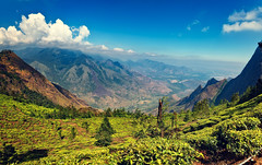 Tea plantation in Munnar, Kerala, India (CamelKW) Tags: tea plantation munnar kerala india hillstation mountain skies 2014