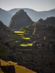 Central Tree Machu Picchu (Lesmacphotos) Tags: machupicchu peru inca inka stone masonry hills mountains walls steps stairs green