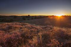 On a summer evening (Jessie van Weert) Tags: outdoor landscape field sky heather sunset zonsondergang veluwe posbank postbank gelderland light sun sunshine