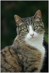 Poeka ... (Jan Gee) Tags: poeka change move removal verhuizing umzug cat chat chats katze kat poes portret portrait gata gatto gato kot tabby