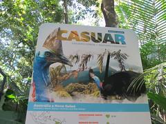 """Le Parc des Oiseaux d'Iguaçu: un oiseau préhistorique d'Australie <a style=""""margin-left:10px; font-size:0.8em;"""" href=""""http://www.flickr.com/photos/127723101@N04/29643052615/"""" target=""""_blank"""">@flickr</a>"""