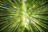 look up (ThomasMueller.Photography) Tags: asia asien bamboo bambus baum forest green grün japan japanese landscape landschaft natur nature nihon nippon reisen sehenswürdigkeit sight sonne sonnenschein sun sunrays travel tree wald 日本 kyōtoshi kyōtofu jp