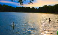 LAKE SUNSET (aminekaytoni) Tags: lake lac sunset sunrise oiseaux exterieur outside landscape jungle verdure ngc canon1785mm canon50d 17mm