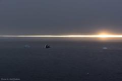 Bird in sunset (Elvar H) Tags: arcticocean helmerhansen siarctic ice iceedge
