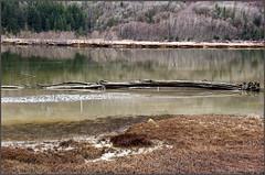 squamish river redone (tesseract33) Tags: world light water river nikon squamish nikondigital squamishriver squamishestuary nikond300 tesseract33 blinkagain squamishphotographers peterlangphtography