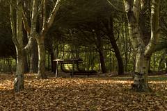 Um sitio para relaxar / A place to relax (Nuno's Photo Warehouse) Tags: park parque autumn cidade folhas portugal canon garden bench banco porto jardim 7d leafs outono 2012 maratonafotograficafnac nunofrocha