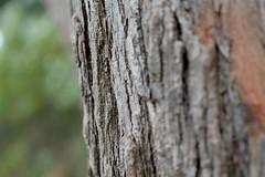 The woods (Haydelis) Tags: tree texture canon arbol caracas avila 2012 week49 522012 52weeksthe2012edition weekofdecember2