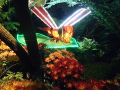 #illuminasia  #autumn (Mr. Happy Face - Peace :)) Tags: illuminations lights colors season festiveseason lumen lux luz light luce licht  lumire  yyc zoo art2016