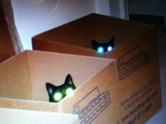 The girls glowing eyes (dagboshoots) Tags: uk england cats house black london cat eyes kitten glow apartment flat box interior pussy ears catinbox furnishing thelittledoglaughed dagbo touringboy