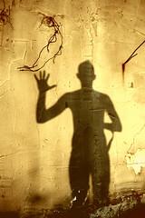 Hello MD (ADIDA FALLEN ANGEL) Tags: portrait people selfportrait me myself israel nikon profile d40