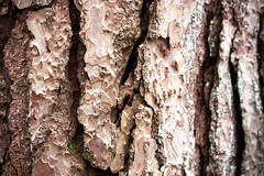 Tree bark (Gondolin Girl) Tags: park trees macro tree texture nature closeup parks textures bark treebark linnpark
