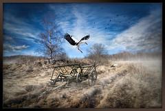 Spring (DigiZed) Tags: sky birds fog clouds photoshop landscape spring cart hdr stork oldgrass