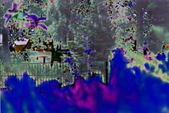 My Garden II (psychedelic world) Tags: flowers art garden meadow wiese blumen psychedelic garten psychedelisch wohltorf psychedelicworld