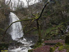 Winter Plumage (alexinatempa) Tags: tree water wales waterfall melincourt melincourtfalls