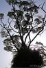 Bush Silhoulette (bob_katt) Tags: trees newzealand sky canon bush northisland forks aotearoa kapiti otaki 500d siloulette