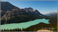 Peyto lake (BB33FR) Tags: canada alberta 2012 peytolake banffpark bb33fr mygearandme mygearandmepremium mygearandmebronze rememberthatmomentlevel1 rememberthatmomentlevel2 rememberthatmomentlevel3