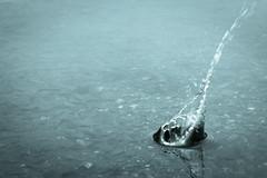 Untitled #43 (Markus Moning) Tags: lake nature water up stone closeup canon eos schweiz switzerland see pond wasser close natur surface drop splash alter teich rhein diepoldsau stein untitled tropfen moning sanktgallen oberfläche spritzer 50d markusmoning