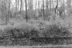 Bad conscience berries (Carsten aus Bonn) Tags: film minolta 28mm ilford fp4 x700 rokkor