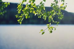 Eternal silence (Mathijs Delva) Tags: blue light plants sunlight lake blur green nature water freedom weeds quiet open bokeh silence serenity serene breeze 50mmf14