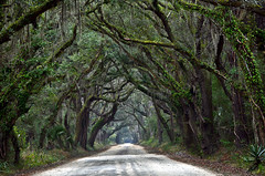 Botany Bay Road, South Carolina (Jeka World Photography) Tags: road trees usa oak unitedstates perspective southcarolina plantation spanishmoss botanybay gree edistoisland liveoaks botanybat jeffrosephotography jekawordlphotography