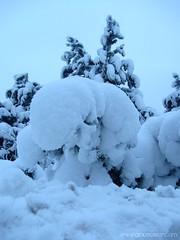 SCULPTURE OF SNOW (Grace Olsson Fotograf(Im abroad)) Tags: winter sculpture white snow tree finland rovaniemi wonderland