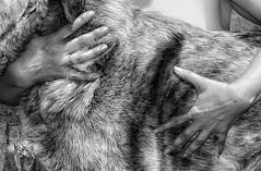 ENERO (elcontadordearena) Tags: madrid en dog blancoynegro animal animals blackwhite hands calendar perro animales amistad pinto blanconegro calendario asociacion apuros perrigatos elcontadordearena elcontadordearenafotografia perrigatosenapuros ponteensupiel