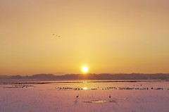 Freezing morning (K16mix) Tags: winter lake nature japan landscape swan asia lotus swamp     miyagi tohoku  touhoku    izunuma     ramsarconvention tomeshi  kuriharashi