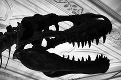 Interior Decoratasaurus Rex (Pat Charles) Tags: uk england london silhouette museum skull nikon dinosaur unitedkingdom bones flickraward rubyphotographer flickraward5 mygearandme mygearandmepremium mygearandmebronze ruby10 ruby5