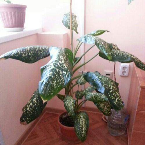 Новое растение в моем кабинете.
