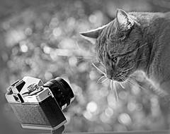 Waiting for the little bird... (<< MZ/X >>) Tags: bw cat canon bokeh 85mm jupiter praktica soe 30d jupiter9 eos30d mygearandme ruby10 ruby15