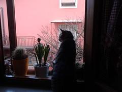 Oggi piove non si esce..... (My Way2008) Tags: finestra pioggia gatto edi controluce duma flickrandroidapp:filter=none