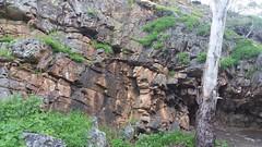 20160716_145113 (StephenMitchell) Tags: adelaidegreenhills nature organic trees gully valley hill mountain blackwood belair edenhills southaustralia trek walk creek rock stone