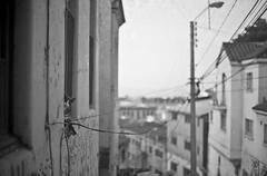 Valpo (FelipeBe) Tags: chile byn film blanco cat 35mm valparaiso negro bn gato latinoamerica pelicula 35 ilford valpo analogico